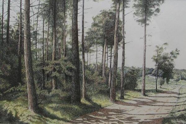 Bos bij Planken Wambuis